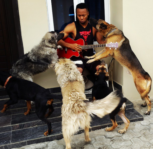 Flavour and his dogs